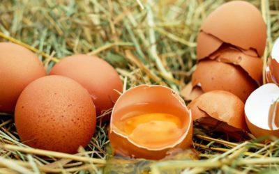 La centrale d'achat nouvelle génération Horizon lance sa 1ère filière agricole française d'approvisionnement