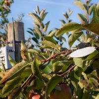 Sencrop Leafcrop 4