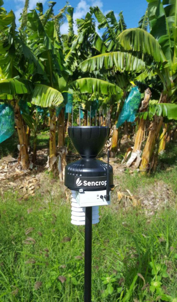 Sencrop connecte les bananeraies martiniquaises  avec ses stations agro-météo