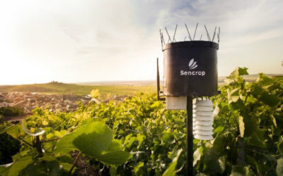 Sencrop, la station agro-météo connectée imaginée pour les viticulteurs idéale pour prévenir le gel et les maladies.